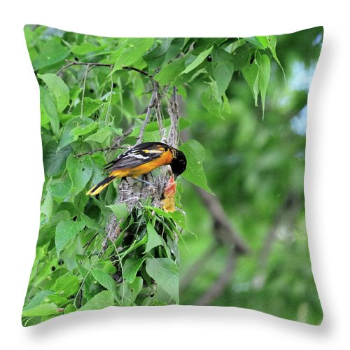 Orchard Oriole Throw Pillow featuring the photograph Orchard Oriole Feeding The Kids by David Arment
