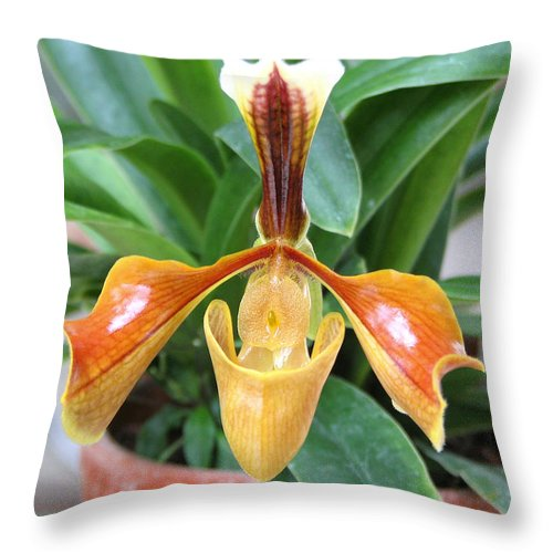 Orchid Throw Pillow featuring the photograph Orchid 4 by David Dunham