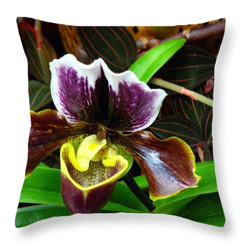 Orchid Throw Pillow featuring the photograph Orchid 5 by Peggy King
