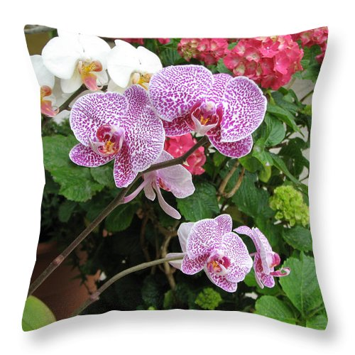 Orchid Throw Pillow featuring the photograph Orchid 6 by David Dunham
