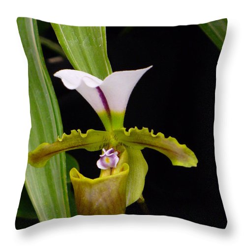 Orchid Throw Pillow featuring the photograph Orchid 9 by Peggy King