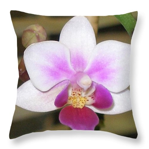 Purple Throw Pillow featuring the photograph Orchid Explosion by Maria Bonnier-Perez