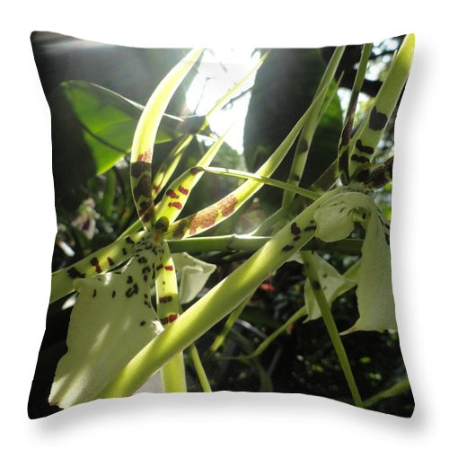 Orchid Throw Pillow featuring the photograph Orchid Light by Trish Hale