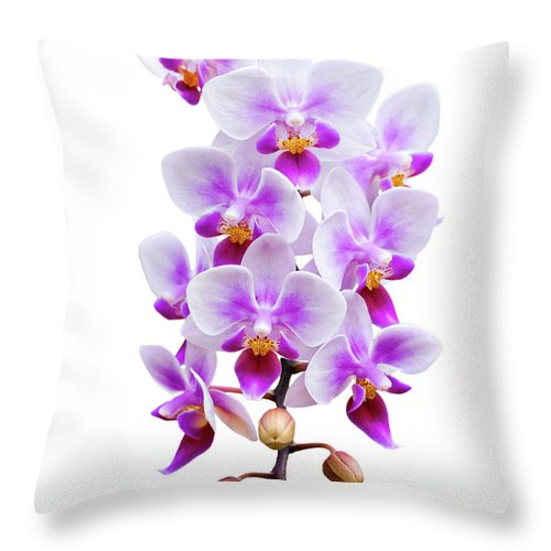 Orchid Throw Pillow featuring the photograph Orchid by Meirion Matthias