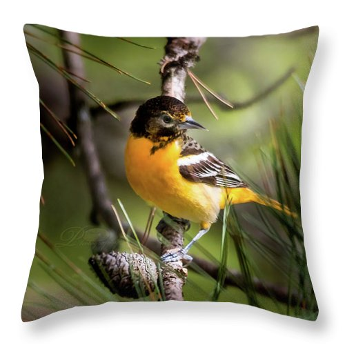 Bird Throw Pillow featuring the photograph Oriole And Pine Cone by Michael Johnk