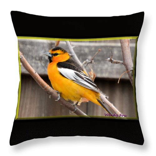 Bird Throw Pillow featuring the photograph Oriole In Colorado by Wendy Fox