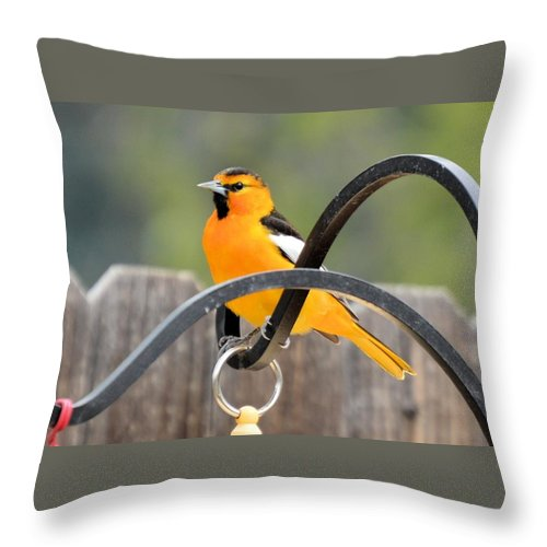 Bird Throw Pillow featuring the photograph Oriole by Wendy Fox