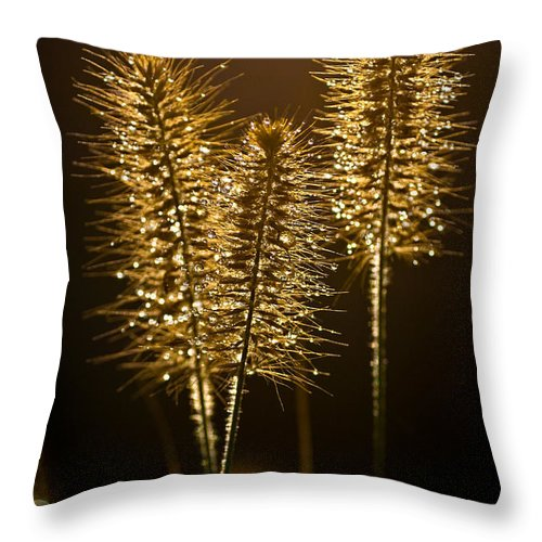 Grass Throw Pillow featuring the photograph Ornamental Grass With Dew Drops by Onyonet Photo Studios