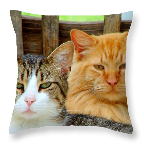 Cats Throw Pillow featuring the photograph Oscar And Red by J R Seymour