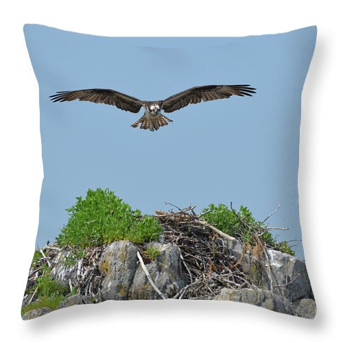 Osprey Throw Pillow featuring the photograph Osprey Flying Over A Bird's Nest by DejaVu Designs