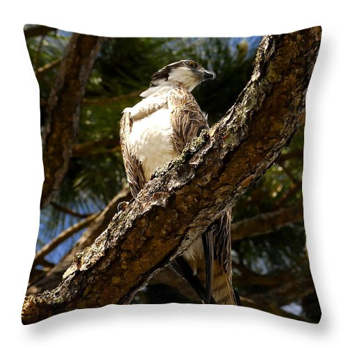 Osprey Throw Pillow featuring the photograph Osprey Hunting by David Lee Thompson