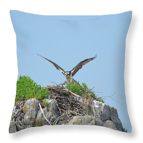 Osprey Throw Pillow featuring the photograph Osprey Landing On A Nest by DejaVu Designs