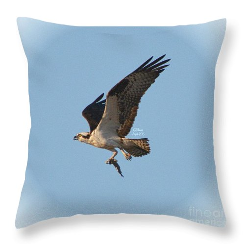 Osprey Throw Pillow featuring the photograph Osprey Natures Way Lv by Rennae Christman