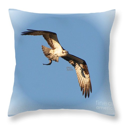 Throw Pillow featuring the photograph Osprey Natures Way by Rennae Christman