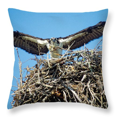 Nature Throw Pillow featuring the photograph Osprey Wingspan by Steve Somerville