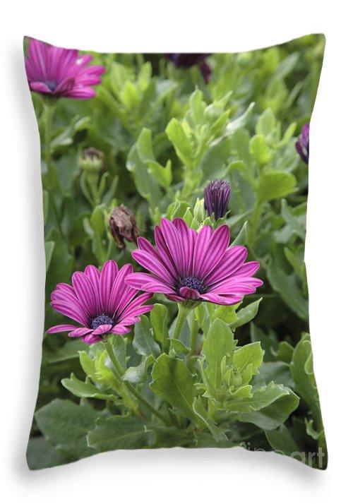 New England Throw Pillow featuring the photograph Osteospermum Flowers by Erin Paul Donovan
