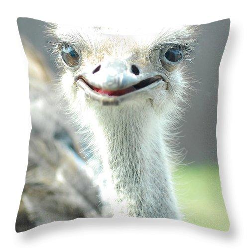 Ostrich Throw Pillow featuring the photograph Ostrich Grin by Steve Somerville