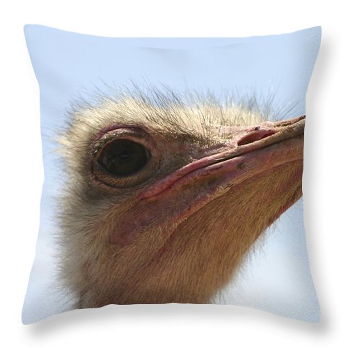 Ostrich Throw Pillow featuring the photograph Ostrich Head Close Up by Danny Yanai