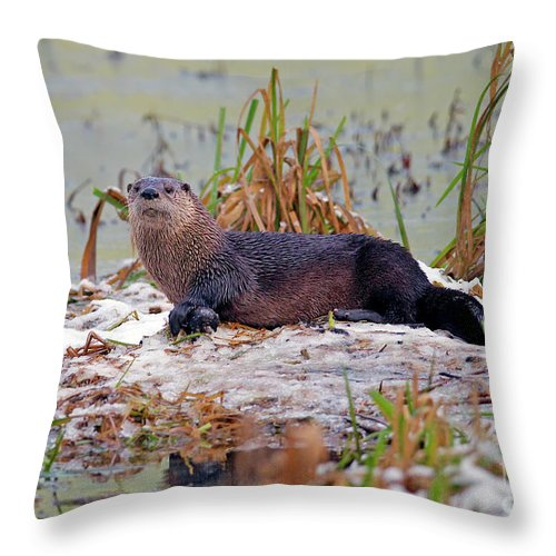 North American River Otter Throw Pillow featuring the photograph Otter 2 by Sharon Talson