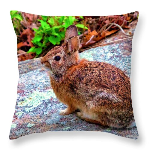Animal Throw Pillow featuring the photograph Out In The Yard by Joe Geraci