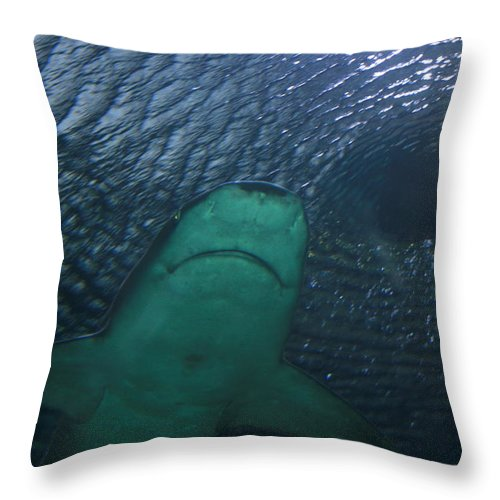 Shark Throw Pillow featuring the photograph Out Of The Vortex by David Dunham