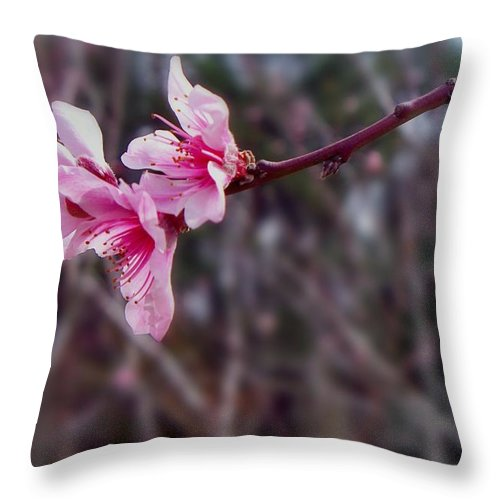 Peach Throw Pillow featuring the photograph Out On A Limb by Betty Northcutt