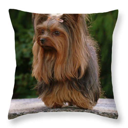 Yorkie Throw Pillow featuring the photograph Outdoors Girl by Gail Bridger