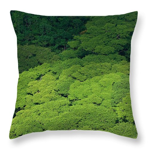 Birds Eye View Throw Pillow featuring the photograph Over The Treetops by Max Steinwald