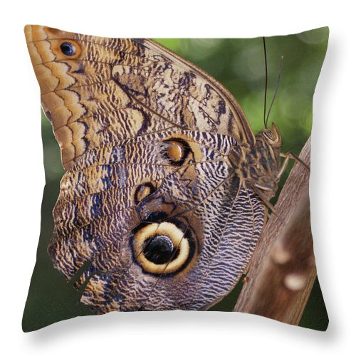 Butterfly Throw Pillow featuring the photograph Owl Close Up by Shelley Jones