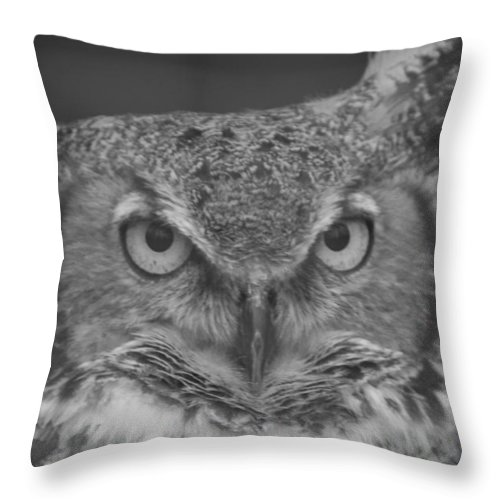 Owl Throw Pillow featuring the photograph Owl Love by Sheryl Mayhew