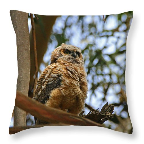Great Throw Pillow featuring the photograph Owlet Lookout by Craig Corwin