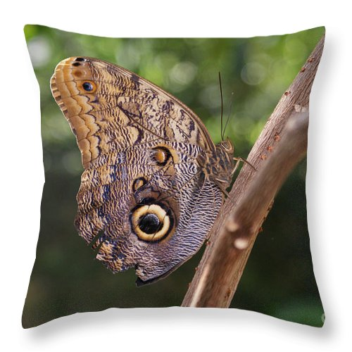 Butterfly Throw Pillow featuring the photograph Owls Don't Always Have Feathers by Shelley Jones