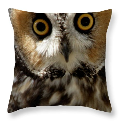 Wildlife Throw Pillow featuring the photograph Owl's Eyes by Larry Allan