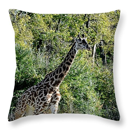 Animals Throw Pillow featuring the photograph Pacer by Jan Amiss Photography