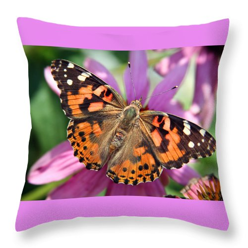 Painted Lady Throw Pillow featuring the photograph Painted Lady Butterfly by Margie Wildblood