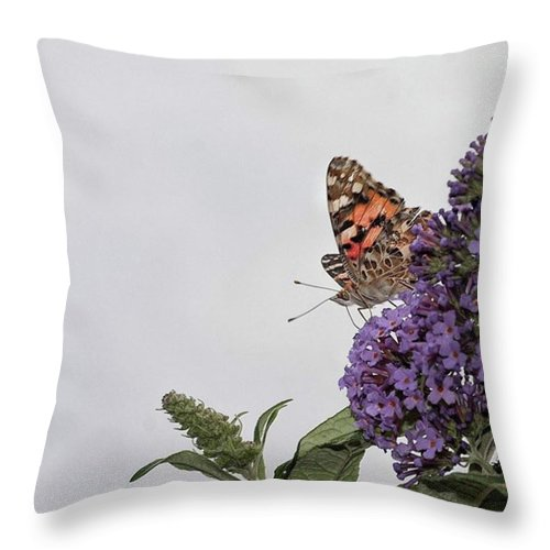 Insectsofinstagram Throw Pillow featuring the photograph Painted Lady (vanessa Cardui) by John Edwards