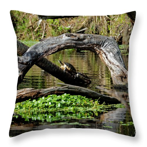 Painted Turtles Throw Pillow featuring the photograph Painted Turtles by Paul Mashburn