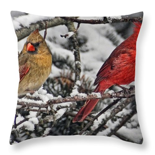 Cardinals Throw Pillow featuring the photograph Pair Of Cardinals In Winter by Peg Runyan