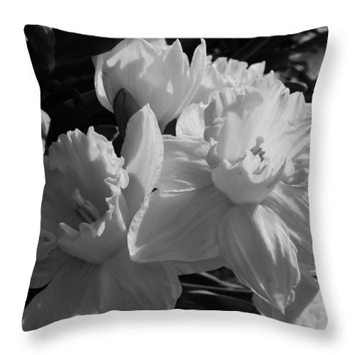 Pallor Throw Pillow featuring the photograph Pallor In Light by Natalie LaRocque