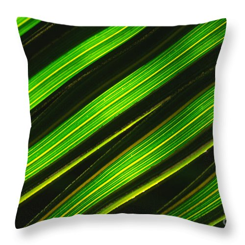 Macro Throw Pillow featuring the photograph Palm Frond Abstract by Sandra Bronstein