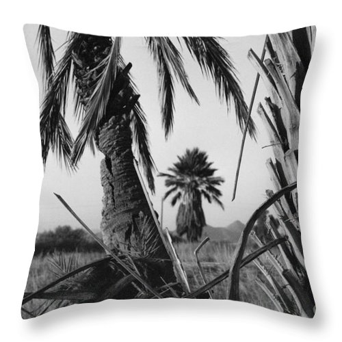 Black And White Photograpy Throw Pillow featuring the photograph Palm In View Bw Horizontal by Heather Kirk