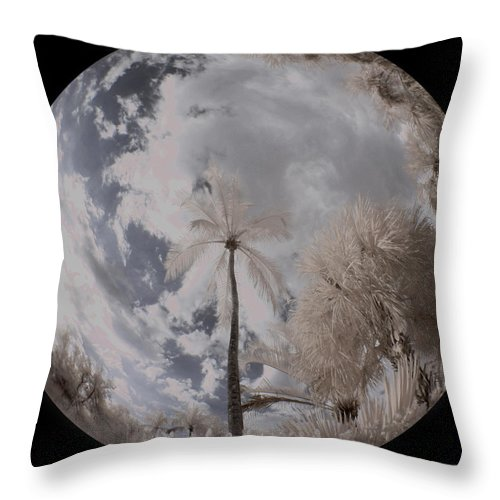 Trees Throw Pillow featuring the photograph Palm Singularity by Gary Bartoloni