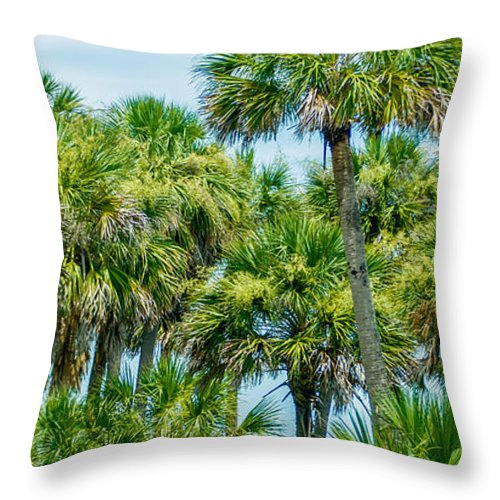 Palmetto Throw Pillow featuring the photograph Palmetto Palm Trees In Sub Tropical Climate Of Usa by Alex Grichenko