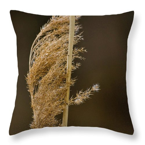 Beige Throw Pillow featuring the photograph Pampas Grass by Alan Look
