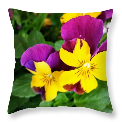 Pansies Throw Pillow featuring the photograph Pansies 2 by Valerie Josi
