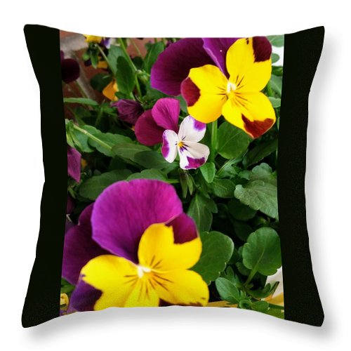 Pansies Throw Pillow featuring the photograph Pansies 3 by Valerie Josi