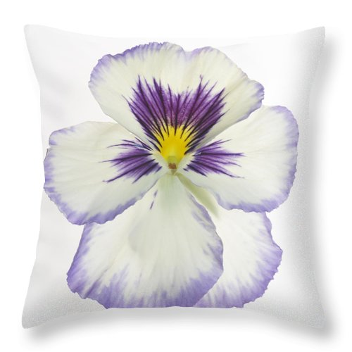Pansy Genus Viola Throw Pillow featuring the photograph Pansy 2 by Tony Cordoza
