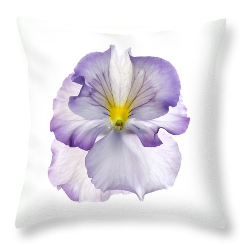 Pansy Genus Viola Throw Pillow featuring the photograph Pansy by Tony Cordoza