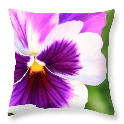 Landscape Throw Pillow featuring the photograph Pansy Wave by Janice Bajek