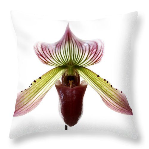 Orchid Throw Pillow featuring the photograph Paphiopedilum Lawrenceanum by Marilyn Hunt